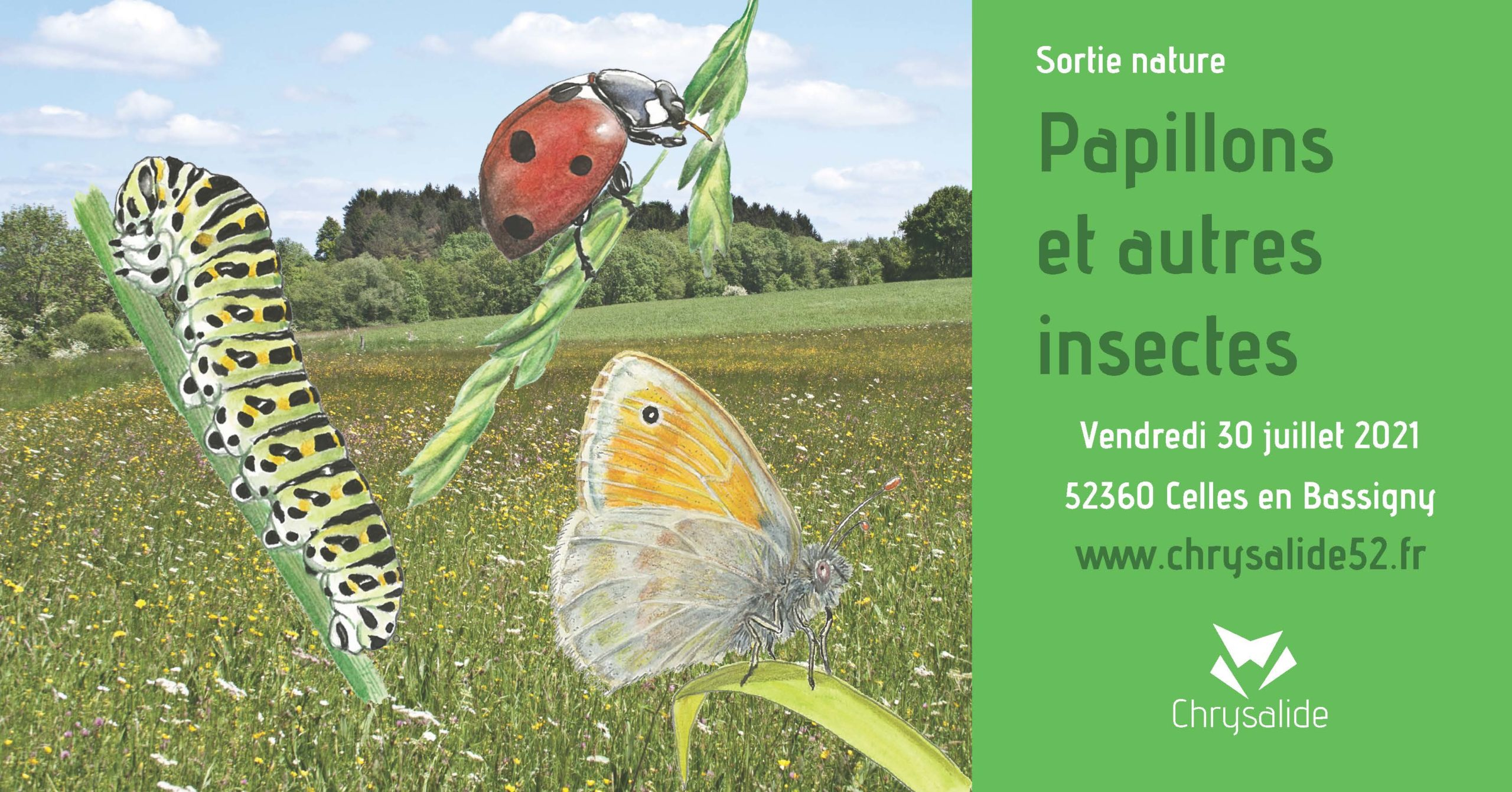 Sortie nature - Papillons et autres insectes- Chrysalide52 - Michael Geber - Haute-Marne