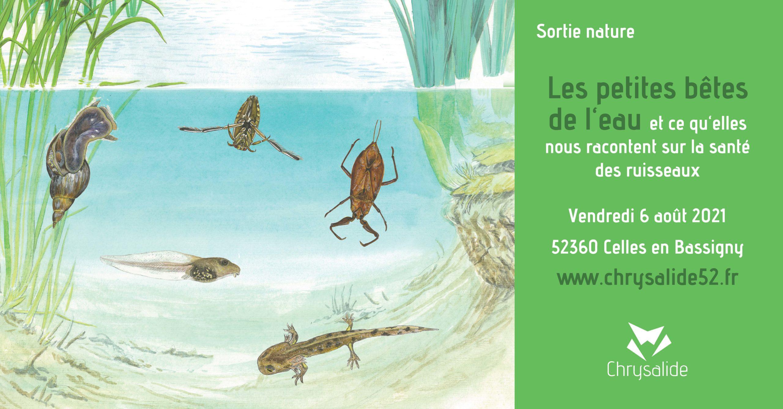 Sortie nature : Les petites bêtes de l'eau