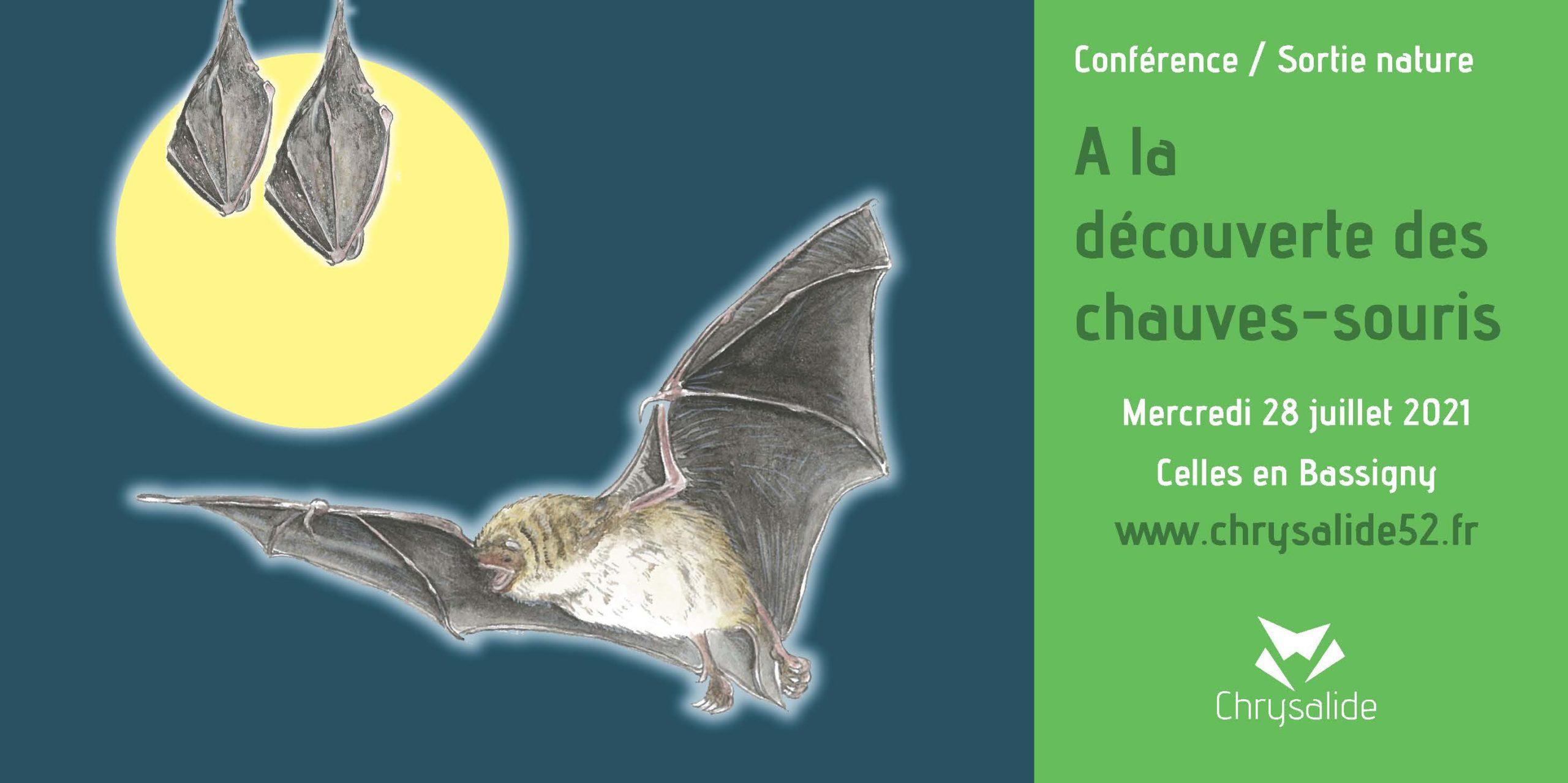 Conférence - Sortie nature - A la découverte des chauves-souris- Chrysalide52 - Michael Geber - Haute-Marne