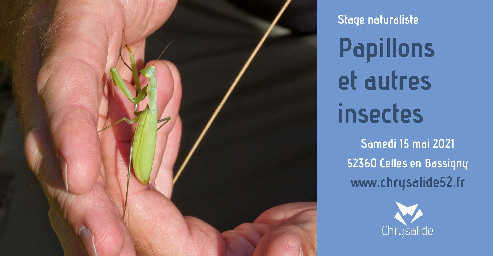 Stage naturaliste - Papillons et autres insectes - Chrysalide52 - Michael Geber - Haute-Marne